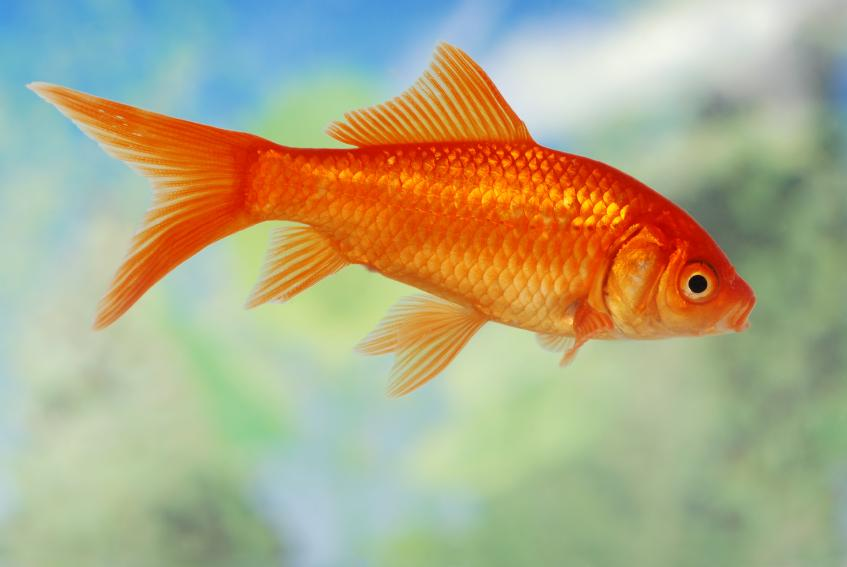 Fish Pose – Matsuyasana