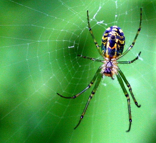 Spider Pose – a creative yoga pose