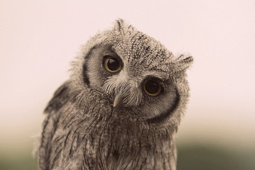 Meditation Owl Teaches Kids to Look Within