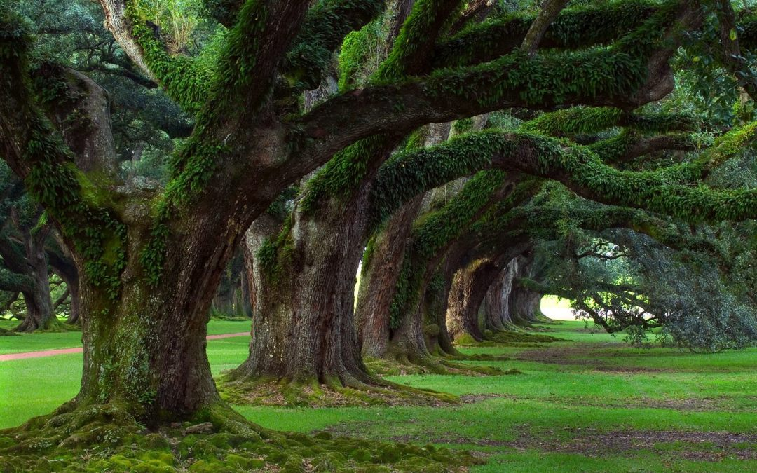 Kids Yoga Poses – Tree Pose – Vrksasana