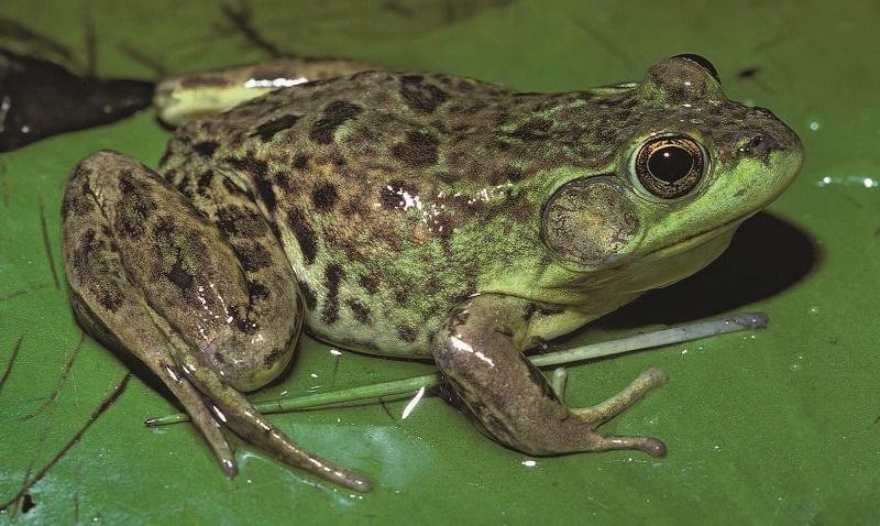 Frog Pose {video}